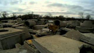 Urban Search And Rescue Training: Technical Pile That Makes A Lot Of Dogs Squirm