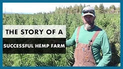 How to grow hemp - Our successful industrial hemp harvest for CBD oil