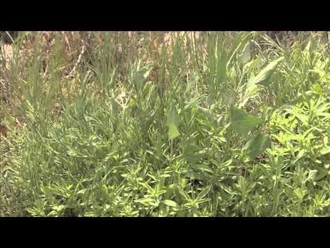 Nebraska Environmental Trust Video 2014