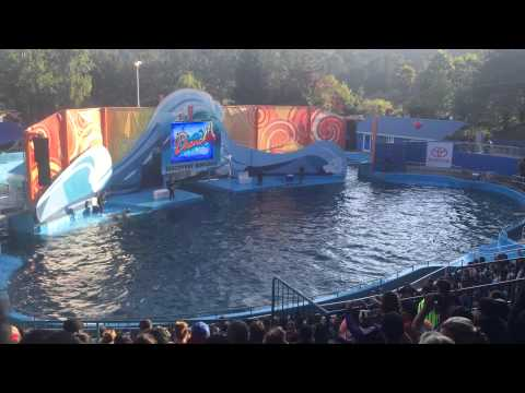 Animal Attractions Six Flags Discovery Kingdom dolphin show