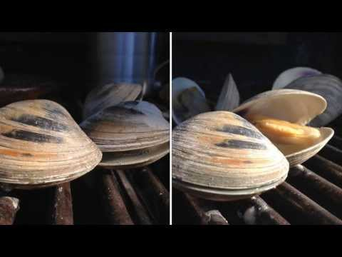 Grilled Clams Recipe - Little Neck Clams How To BBQ Tricks