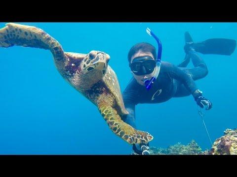 Diving Padang, West Sumatera