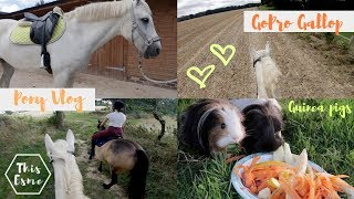 Vlog | Galloping Ponies and Guineapigs | This Esme