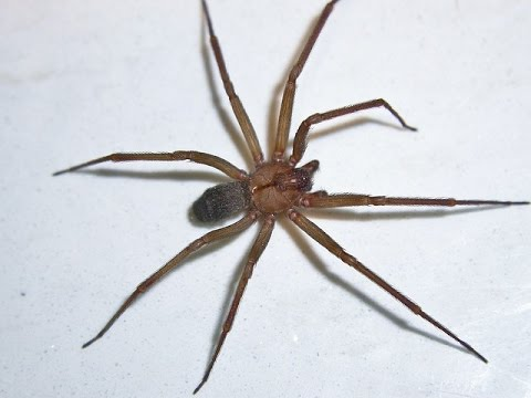 HOW TO KILL A SPIDER Паук в доме (как убить паука)