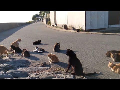 【LIVE】猫の島より生中継