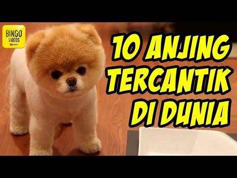 So Cuteee...!!! 10 Jenis Anjing Paling Cantik Dan Menawan Di Dunia