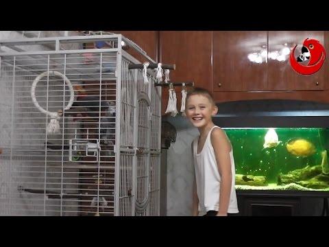 "Gadająca Papuga Grigorij - ""Papuga Wymyśla Dziecku"" (Gregory The Talking Parrot)"