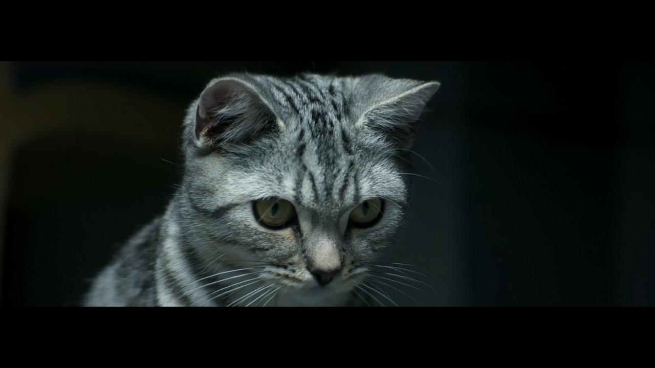 фото кота бориса из рекламы вискас