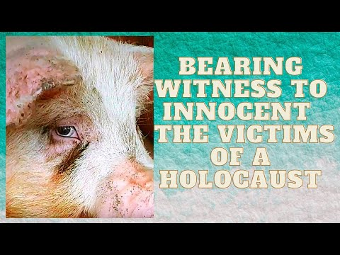 Bearing Witness To Innocent  The Victims Of A Holocaust