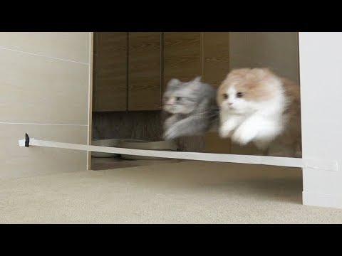 어떤 고양이가 제일 빠를까?