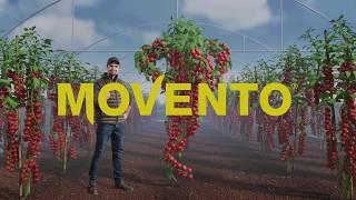 Мовенто Энерджи - уникальный двусторонний системный инсектицид