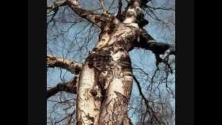 Repeat youtube video 60 WEIRDEST TREES in the World - Funny Unbelievable!!
