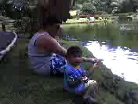 Kealan Feeding The Birds Part 2