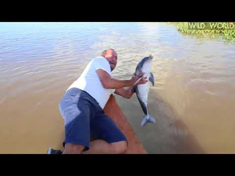 Catching A Baby Dolphin