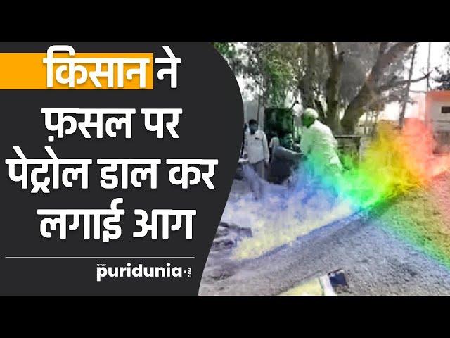 नहीं हो पा रही थी बिक्री, किसान ने फ़सल पर पेट्रोल डाल कर लगाई दी आग | ViralVideo