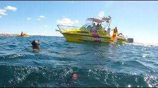 Great White Shark spotted at Sydney Beach, lifesavers to our rescue!