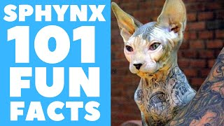 Sphynx Cats 101 : Fun Facts