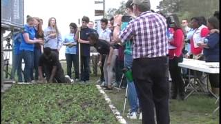 World Record Planting 2014