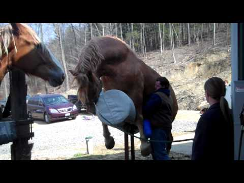 I helped my uncle jack off a horse... (punctuation matters)из YouTube · Длительность: 55 с