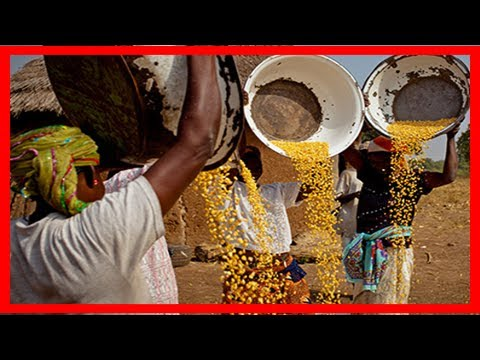 [NG News] Dangote, growafrica and nigeria agribusiness group sign mou for more investment in agricu