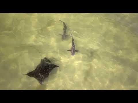 Sea Life From Drone In 4K ---  Apollo Beach Flats In Tampa Bay, FL