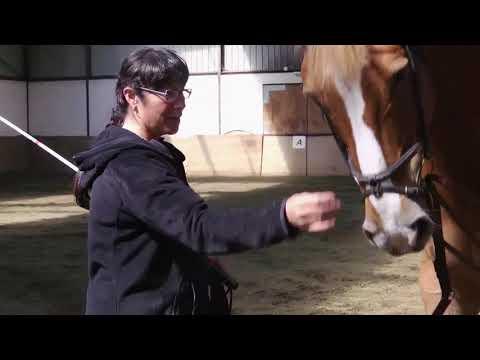 Vidéo Le Cavalier des Airs