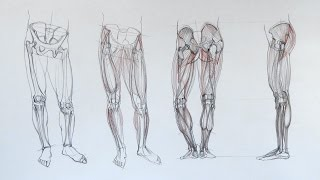 Anatomy of the Leg - Anatomy Master Class
