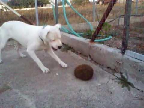 Dog Vs Hedgehog Youtube