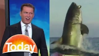 Aussie TV host's hilarious reaction to shark footage