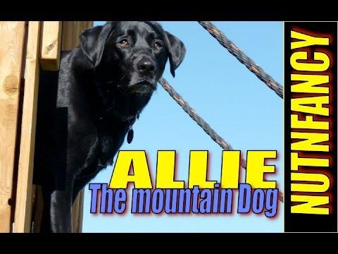 Running My 80 yr Old Dog:  Allie Update!
