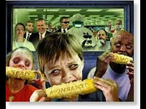 GMO Food -  If Safe I'll Eat It