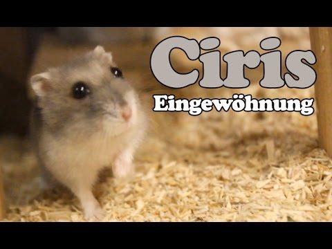 Hamster Eingewhnungs-Update