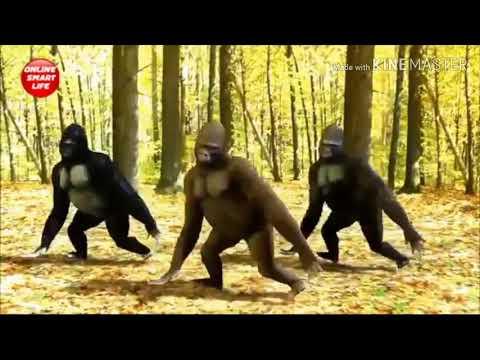 Santali Gorilla Dance 2019