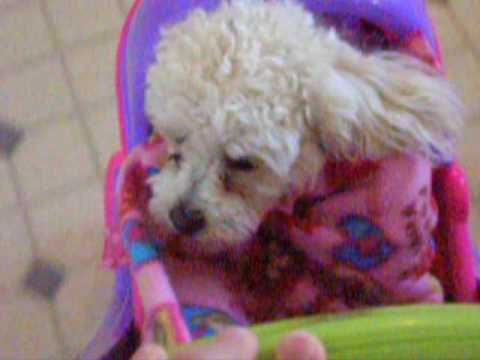 Cute dog in baby carriage