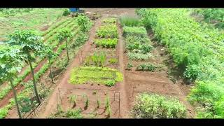 Rebel Herbs Organic Farming