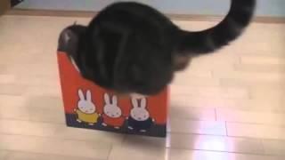 Смешные животные  Смешные кошки видео смотреть бесплатно Самые смешные видео