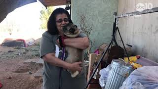 Reunion: Dog lost for 6 years in California reunited with owner in New Mexico | Raw video