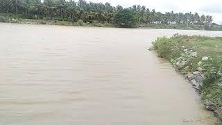 Vedavathi river at Kellodu ವೇದಾವತಿಯಲ್ಲಿ ಮತ್ತೆ ನೀರಿನ ಹರಿವು