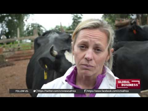 Locals in Kenya boost dairy industry by producing cheese