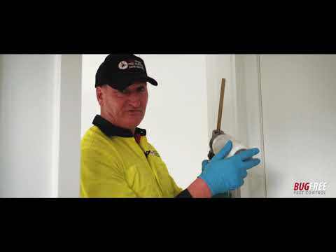 what-does-a-general-pest-control-include---bugfree-pest-control-sydney