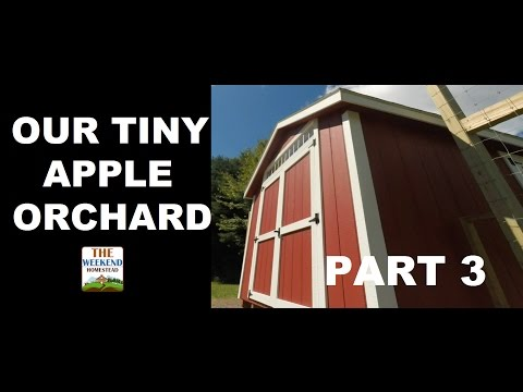 Our Tiny Orchard Series - Part 3 - THE RED SHED