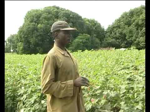 hqdefault - Modifications des pratiques agricoles
