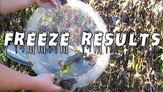 Freeze Update! What Survived?