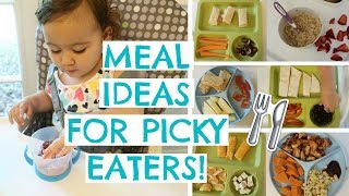 TODDLER MEALS FOR PICKY EATERS | TODDLER MEAL IDEAS | Hayley Paige