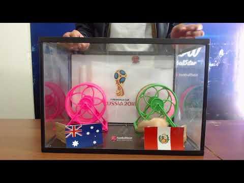 Prediksi Australia Vs Peru Bersama PO  Si Hamster