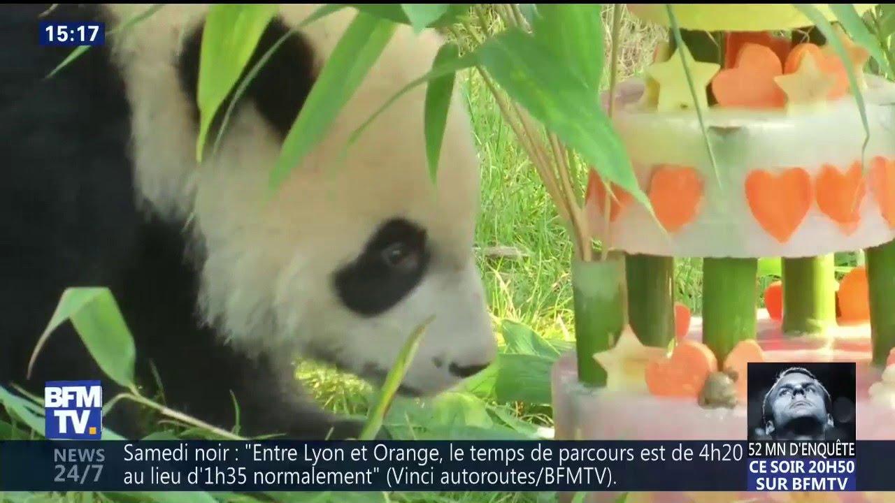 Le Bébé Panda Na Que Moyennement Apprécié Son Gâteau Danniversaire