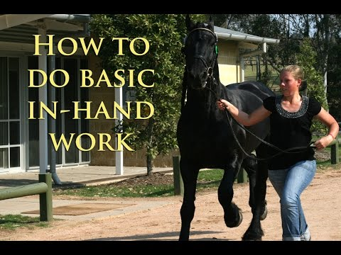 HOW TO DO BASIC IN-HAND WORK - Dressage Mastery TV Episode 16