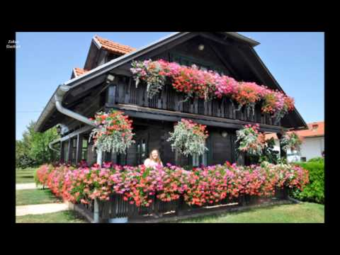 Flowers around the houses Ideas