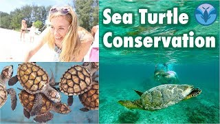 Sea Turtle Conservation!  (Baby Turtles!) | Maddie Moate