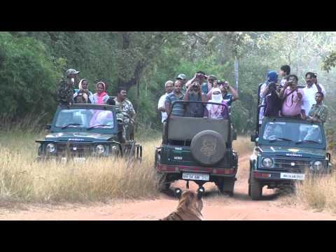 Tadoba Tiger reserve where we met maya